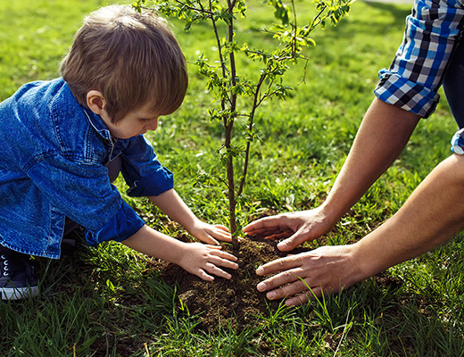 adult and child plant a tree together
